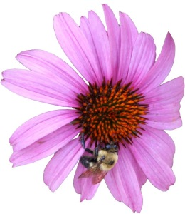 Pink flower bee Copy (1)